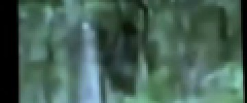 Bigfoot Sighting – Southwest Ontario – 22nd August 2010
