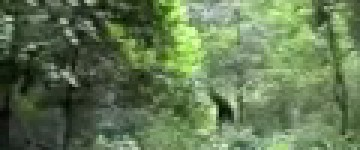 Bigfoot Sighting filmed in Forest