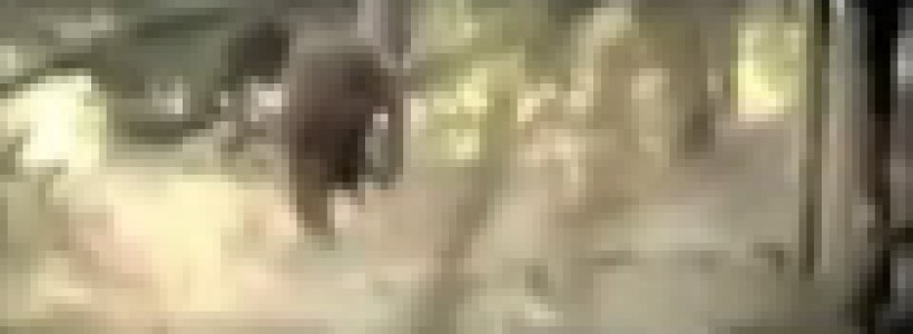 Bigfoot Footage Filmed in Germany