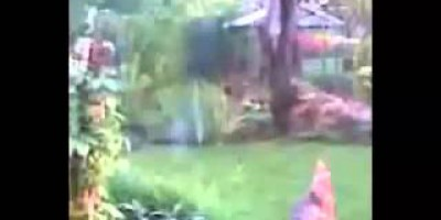 Ghost Runs through backyard garden