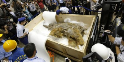Preserved woolly mammoth found frozen in Siberia
