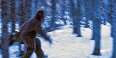Bigfoot Files : The Search For Answers