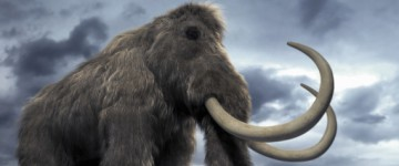 Cloning Woolly Mammoth Is Now Possible, Say Scientists