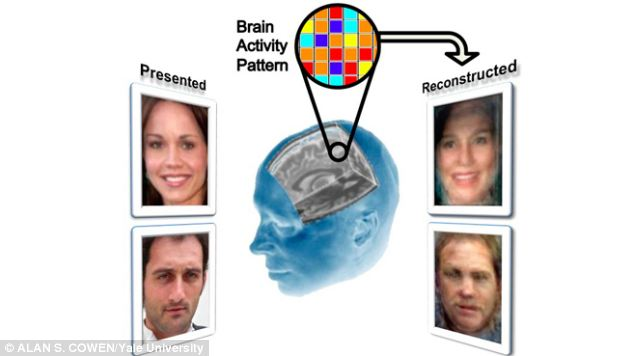 Researchers showed participants a series of pictures of faces (left) and them monitored their brain activity with an fMRI scanner before reconstructing the images (right)
