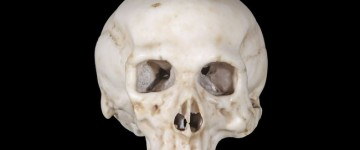 Skull bought for $400 believed to be made by Leonardo da Vinci