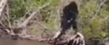 Bigfoot Sighting in Virginia – July 2014