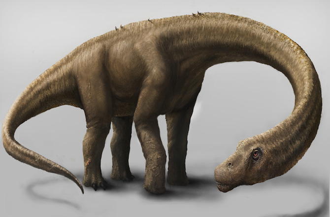 Recreation of Dreadnoughtus schrani. Credit: Mark A. Klinger, Carnegie Museum of Natural History