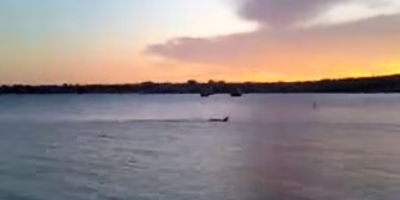 Loch Ness monster's cousin is caught on tape