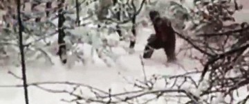 Bigfoot Sighting in a Russian Forest