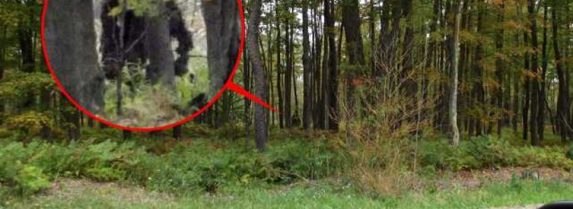 New Bigfoot Sighting From Lettuce Lake Park Florida
