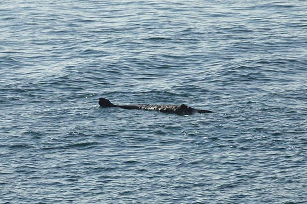 Animal: Could a monster be lurking in waters just off the British coast?