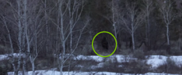 Bigfoot Sighting Filmed in Utah