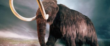 Scientists extract DNA from Woolly Mammoth to bring the species back from the dead