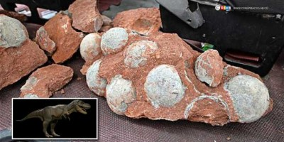 43 Dinosaur Eggs Discovered in China