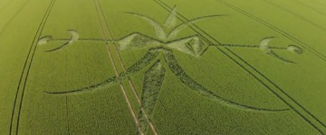 New Crop Circles from the UK
