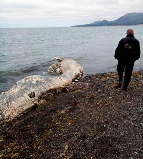 The creature was found on a remote beach in the far east of Russia