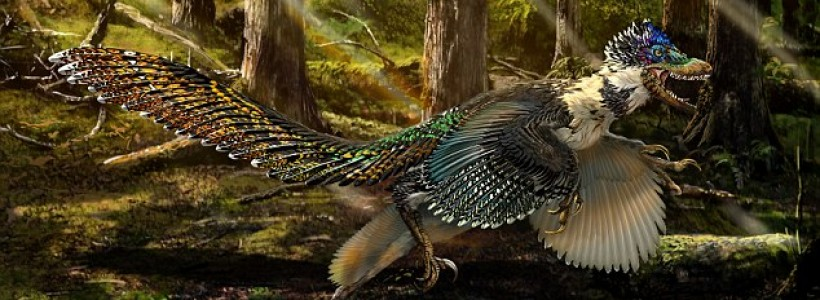 New species of 5ft long winged dinosaur discovered