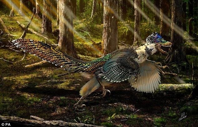 The dinosaur - dubbed Zhenyuanlong suni by researchers - grew to more than five feet in length, and had very short wings compared with other dinosaurs in the same family, consisting of multiple layers of large feathers (artists impression)