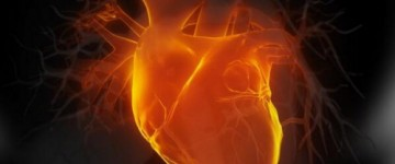 Researchers have used stem cells to create a tiny beating heart