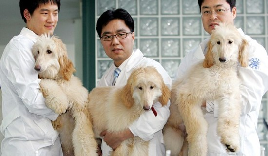 China to build world's largest animal cloning factory