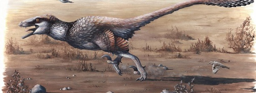 Dakoraptor, the biggest winged raptor in the world