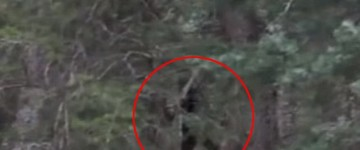 Bigfoot Sighting Filmed at Payson Canyon