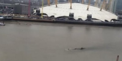 Mysterious Sea Creature Recorded In The River Thames
