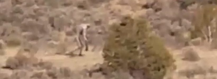 Mysterious creature is filmed roaming through Portuguese desert