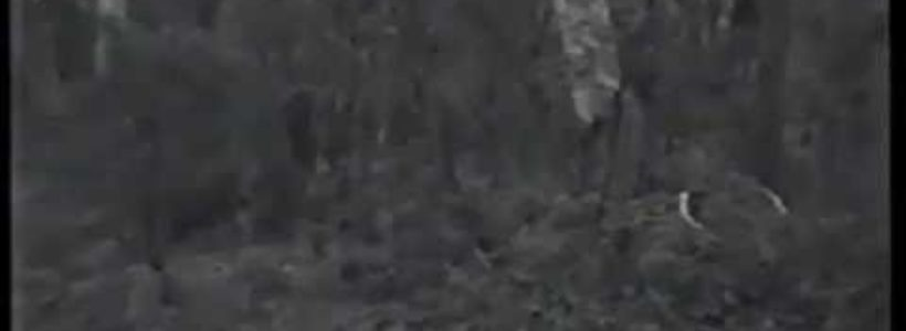 Mysterious Bigfoot Sighting Filmed In Australian Outback