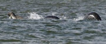 Amateur photographer takes most convincing photos of the Loch Ness Monster ever