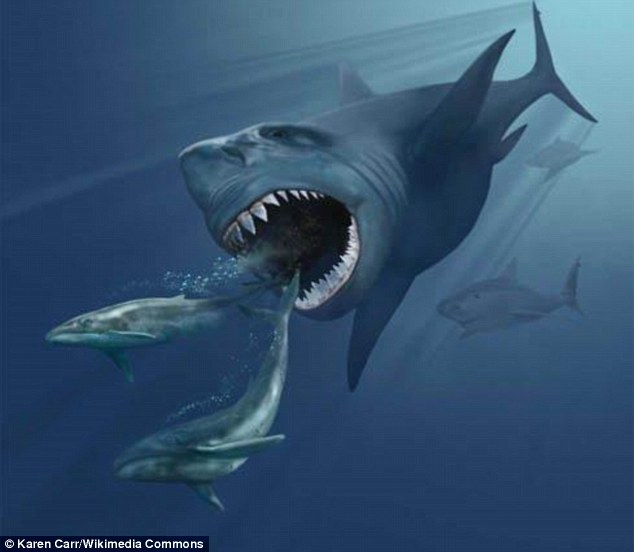 The researchers compared the fossils with the teeth of Carcharocles megalodon, the most massive shark ever discovered. Carcharocles megalodon (illustrated) lived between 23 million and 2.6 million years ago and scientists are divided over how and why the species perished