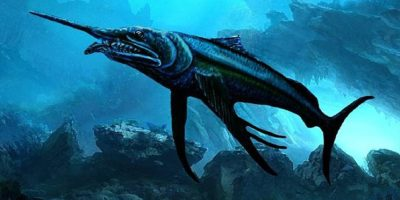 Fossils of rare 100-million-year-old swordfish found