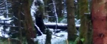 Photo of Sasquatch Taken by Mother Out Walking in Northern Irish Woods