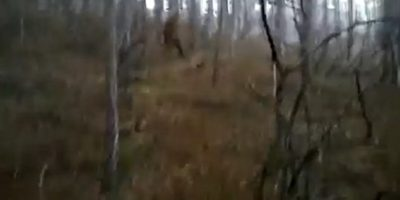 Bigfoot Sighting In The Woods In Ukraine