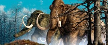 Woolly mammoths could be brought back from the dead in TWO YEARS