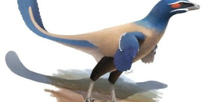 Bird-like dinosaur the size of a HUMAN is found in Canada