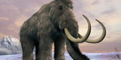 Billionaire bankrolls woolly mammoth resurrection project
