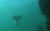 Mermaid Sighting Filmed In Great Barrier Reef
