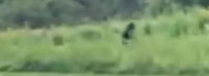 Bigfoot Sighting Filmed In North Carolina