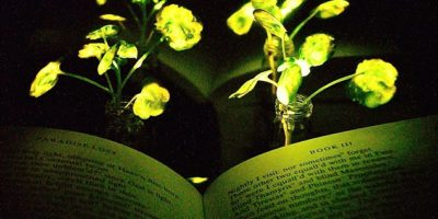 Roads of the future could be lit by glowing trees instead of streetlamps