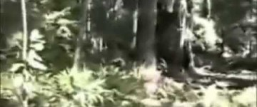 Del Norte BigFoot Sighting, California – 1995