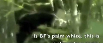 Bigfoot Sighting – Palmetto Grove