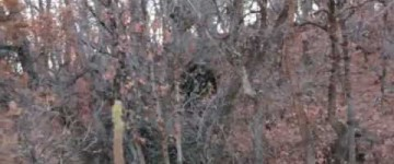 Bigfoot Sighting – Provo Canyon – November 2012