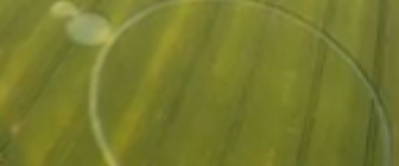 Latest Crop Circle Discovered in Barbiano Lugo near Ravenna, Italy – 6th June 2013