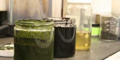 Scientists Turn Algae Into Crude Oil In Less Than An Hour