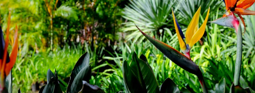 New study suggests plants can 'listen'