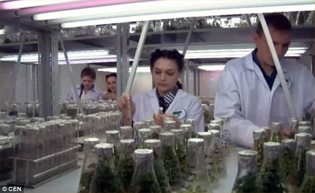 The Russian experts say lasers accelerate the natural processes in plant cells so that seeds and grains sprout faster. A pictured of the laboratory is shown