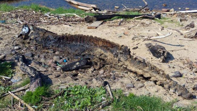 The bizarre sea monster was found at Morfa Beach in Port Talbot, South Wales, UK