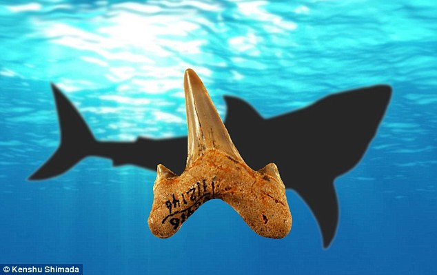A mysterious species of shark that lived 20 million years ago and was 12 feet (3.6 metres) long has managed to escape anyone's notice - until now. The newly-discovered species of shark, named Megalolamna paradoxodon, belongs to a group called Lamniformes