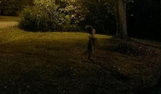 Mysteroius Creature Photographed Under The Full Moon